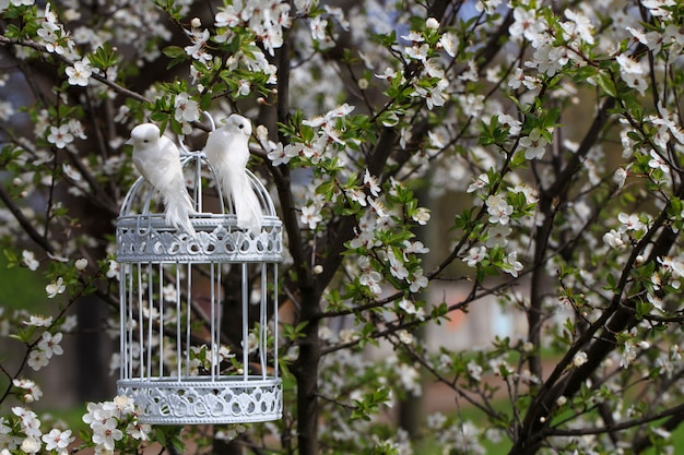 Baumkirschblüten im garten im frühjahr und zwei vögel auf einem käfig an einem baum