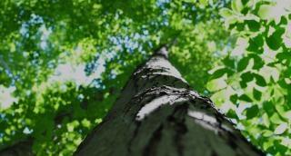 Baumkrone, natur