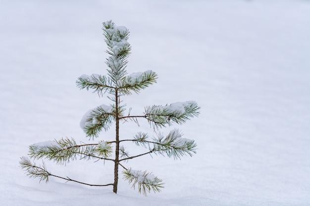 Baumkronenfichte über schnee. starker schneefall, schlechte sicht und winterliche wetterbedingungen.
