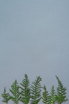 Baumkronenform aus thujazweigen