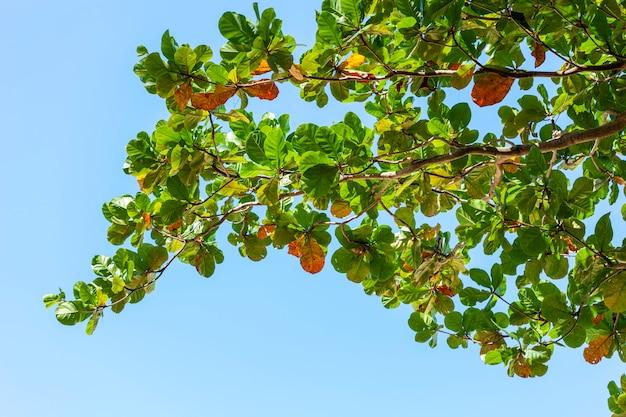 Baumniederlassungen gestalten schöne grünblätter gegen klaren hintergrund des blauen himmels