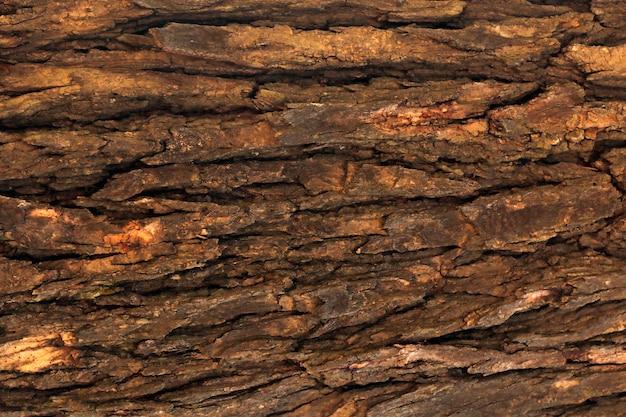 Baumoberfläche holz hintergrund nahaufnahme