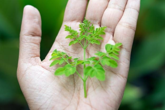 Baumpflanze an hand