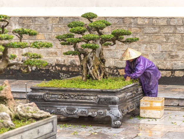 Baumpflegearbeitskraft arbeitet am park in vietnam