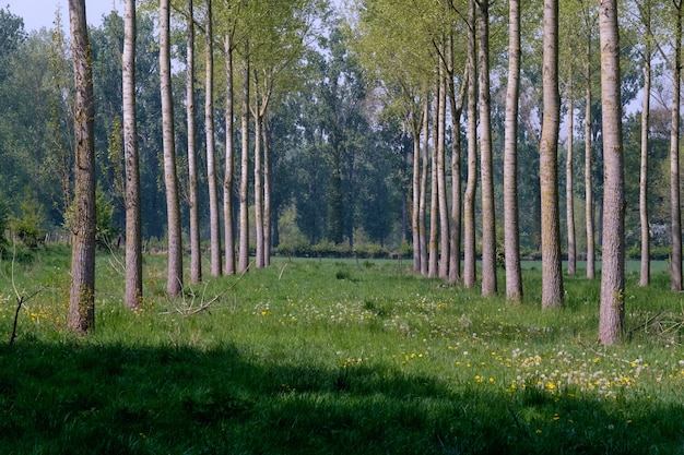 Baumreihe mit grünen gräsern im boden