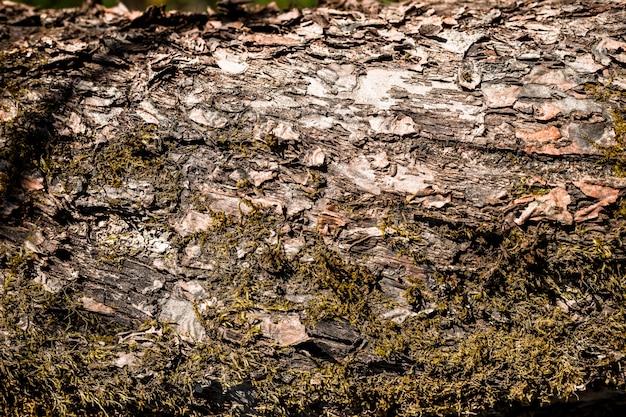 Baumrinde als hintergrund. grünes moos auf altem baum. rinde backgrounf. holz textur