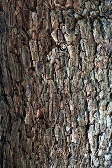 Baumrinde nahaufnahme textur