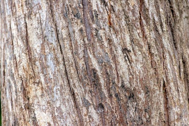 Baumrinde von lebensbaum (thuja spp.) pflanze. natürlicher hintergrund.