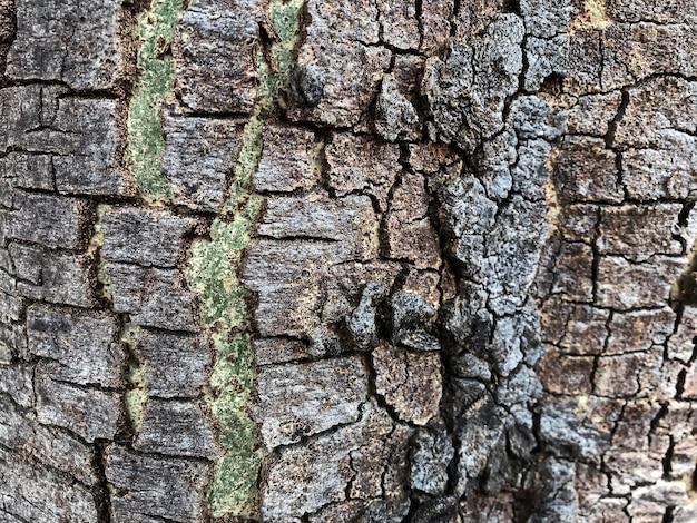Baumrindebeschaffenheitshintergrund
