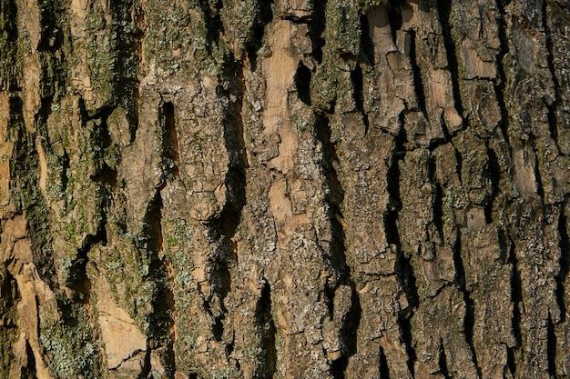 Baumrinden-textur - akazie. wand für webseitenfüllung oder grafikdesign. muster. karte für 3d-textur. hölzern