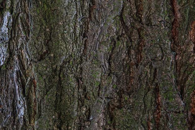 Baumrindenbeschaffenheitshintergrund. strukturiertes muster des alten holzbaumstammes