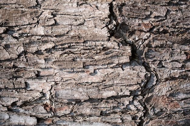 Baumrindenhintergrund. oberflächenstruktur der holzrinde