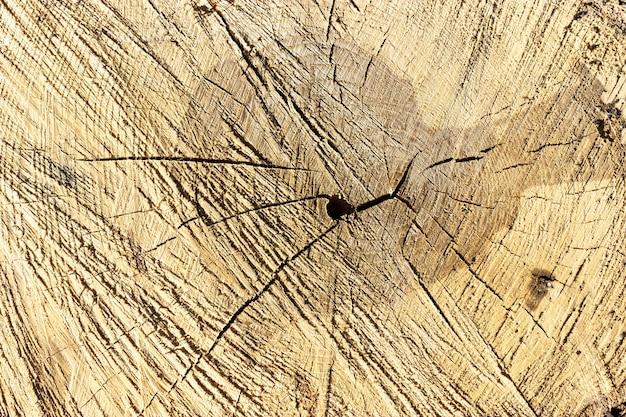 Baumringe sägeschnitt baumstamm hintergrund