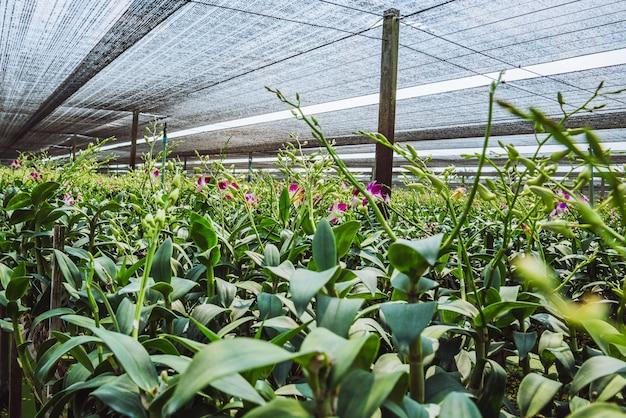 Baumschule orchideenfarm. die blumen werden blühen.