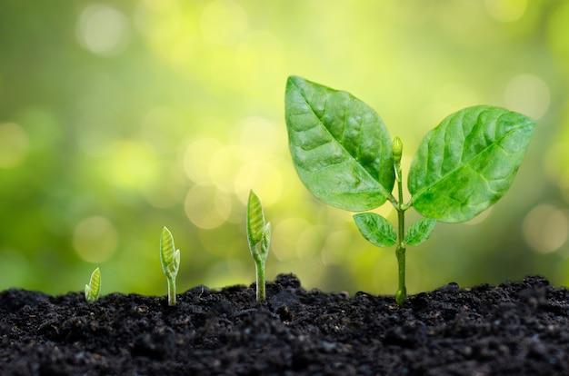 Baumsetzling handpflanzenspross in boden mit sonnenuntergang schließen männliche hand, die jungen baum über grünem hintergrund pflanzt