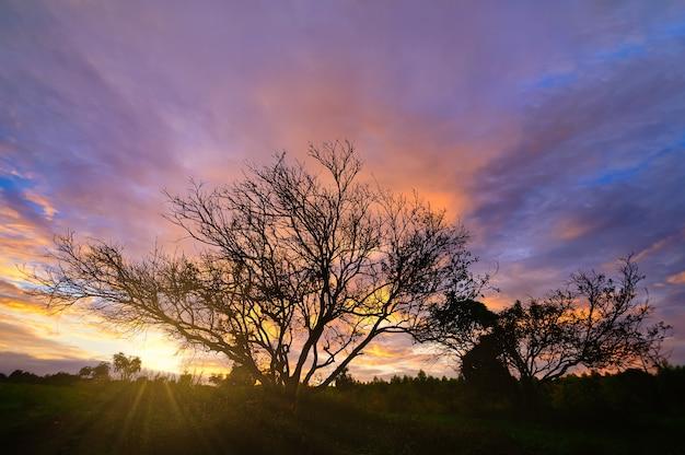 Baumsilhouette und himmel und wolken am abend