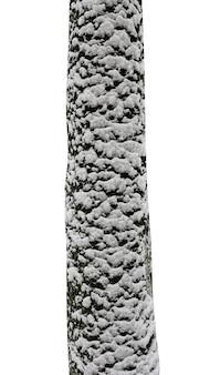 Baumstämme mit schnee isoliert auf weißem hintergrund