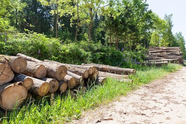 Baumstämme von nadelkiefern, die während der holzernte zusammengestapelt werden, holz mit rinde und schäden