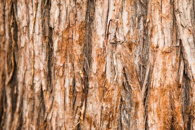 Baumstamm-beschaffenheitsabschluß oben
