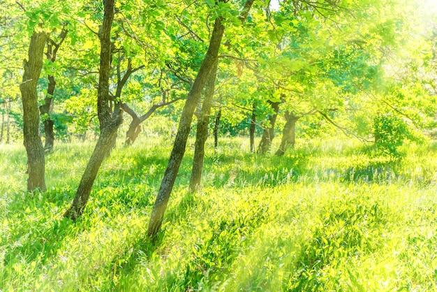Baumstamm im park mit grünem gras und sonnenlicht