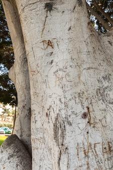 Baumstamm mit in die rinde geschnitzten schriften in puerto rico auf gran canaria, spanien.