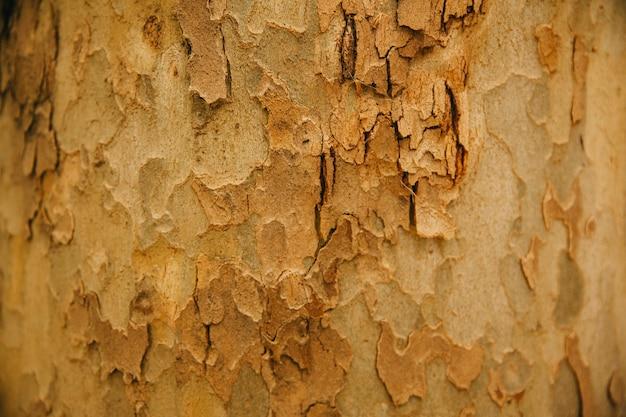 Baumstamm textur