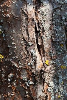 Baumstammteile mit rinde zum schutz