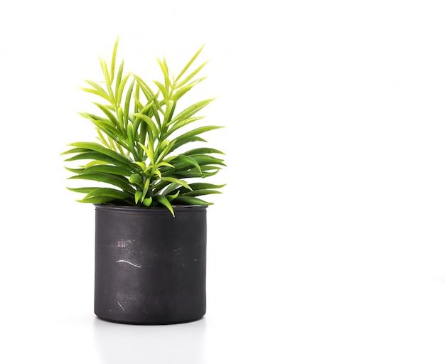 Baumtopf auf weißem hintergrund und copyspace. zimmerpflanze für dekorationen.