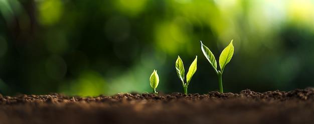 Baumwachstum in der natur und schöne morgenbeleuchtung