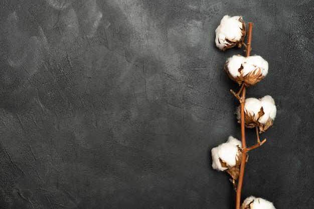 Baumwollblume auf einer schwarzen wand.