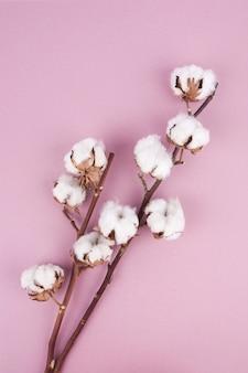 Baumwollblume auf pastellrosahintergrund