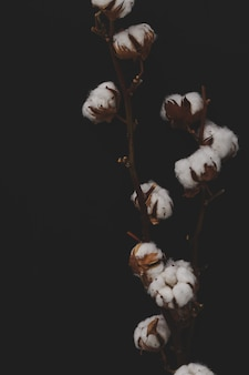 Baumwollblumen auf dunklem hintergrund