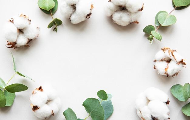 Baumwollblumen und eukalyptus