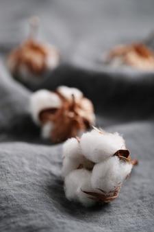 Baumwollblumen