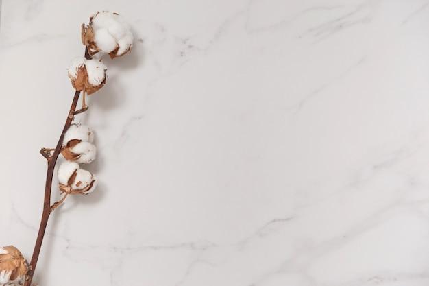 Baumwollblumenzweig auf weißem marmor von oben