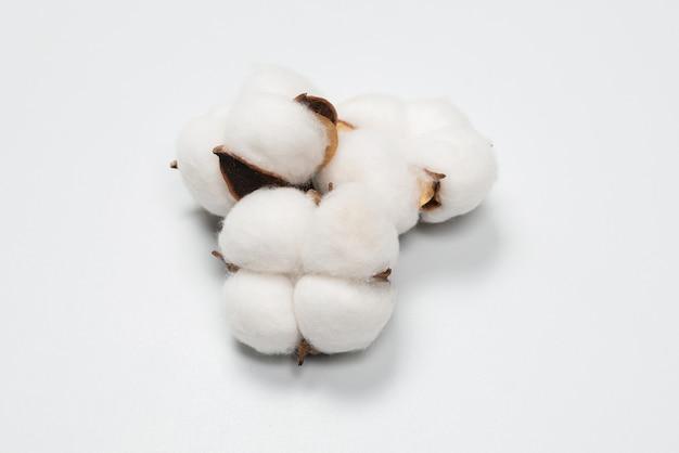 Baumwollblumenzweig isoliert auf weißer oberfläche