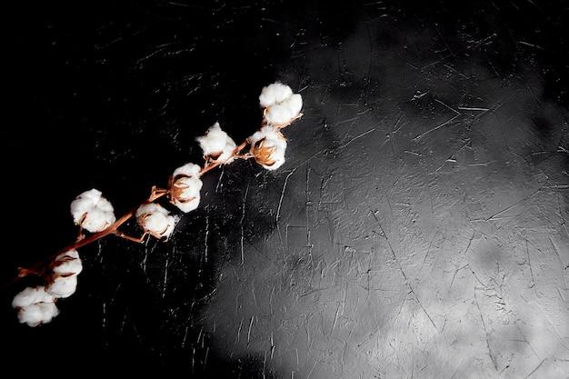Baumwollpflanze auf schwarzem hintergrund. zweig der weißen baumwollblumen auf dunklem steintisch