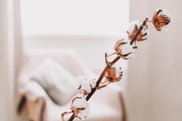 Baumwollzweig in vase auf tisch auf heller oberfläche