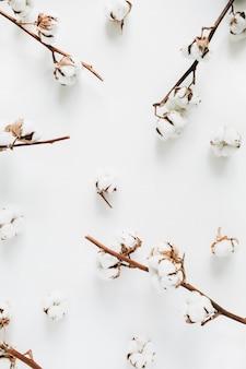 Baumwollzweige und knospenmuster auf weißem hintergrund. flache lage, ansicht von oben