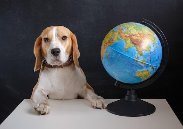 Beagle-hund und schulkugel auf schwarzer schulbehörde