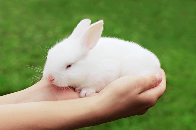 Beauty weißes kaninchen in der hand