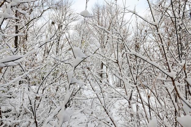 Bedeckt mit schneezweigen der im park wachsenden bäume. nah gegen den himmel fotografiert.