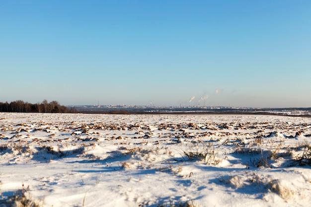 Bedeckt mit weißem schnee, altem gras, das nach einem kleinen schnee auf einem feld wächst.