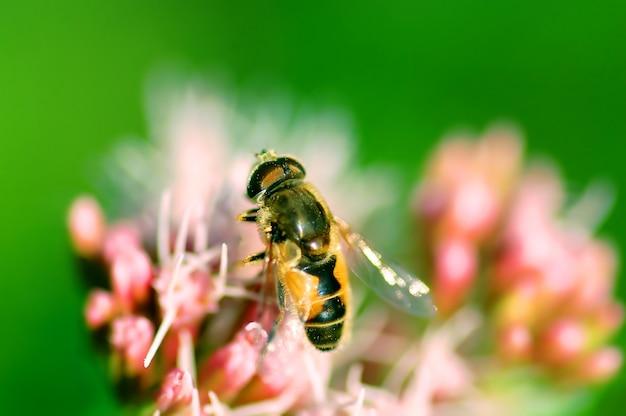 Bee schließen