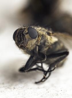 Beeindruckende makroaufnahme einer biene