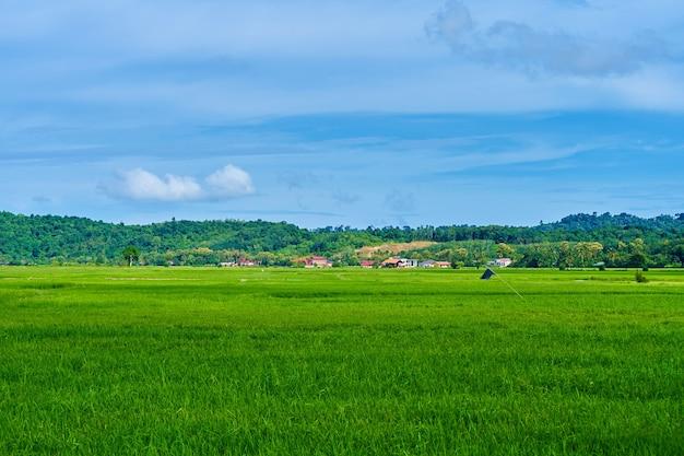 Beeindruckendes grünes reisfeld der landschaft mit bergen im hintergrund.