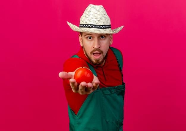 Beeindruckter junger hübscher slawischer gärtner in der uniform und im hut, die die auf der purpurroten wand isolierte tomate mit kopienraum ausstrecken