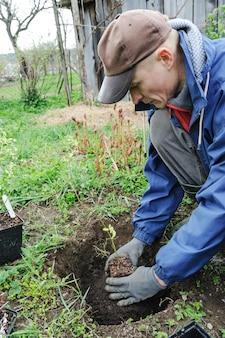 Beerensträucher pflanzen.
