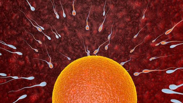 Befruchtung ist die verschmelzung von haploiden gameten ei und spermien konzept befruchtung und implantation 3d-rendering-illustration