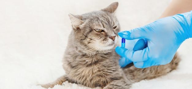 Behandlung von katzenpillen. tiermedizin.
